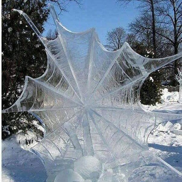 frozen spider web Ervin Dargan